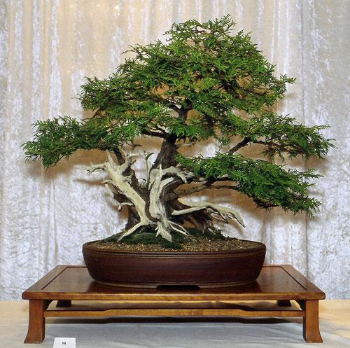 bonsai webseite von putz w. Black Bedroom Furniture Sets. Home Design Ideas