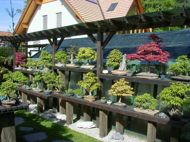 Bonsai Webseite Von Putz W