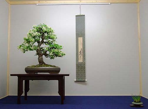 bonsai webseite von putz wolfgang. Black Bedroom Furniture Sets. Home Design Ideas